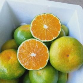 5斤 新鲜橘子湖北蜜桔薄皮