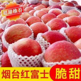 5斤 果园烟台红富士苹果