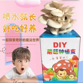 蘑菇菌包家庭种植平菇杏鲍菇可以食用喷水就能长