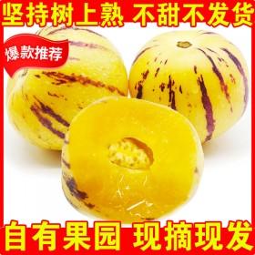 【香甜】云南石林人参果3斤水果新鲜应季水果人生果圆