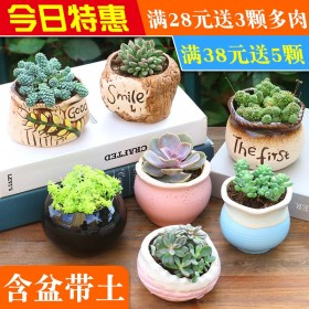 多肉植物组合盆栽室内肉肉花玉露含盆带土新手套餐绿植