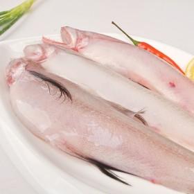 缔海 温州鲜活豆腐鱼海鲜新鲜龙头鱼丝丁鱼九肚鱼水潺