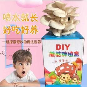 蘑菇菌包家庭种植平菇菌包