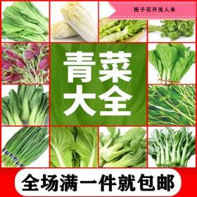 多种蔬菜水果种子
