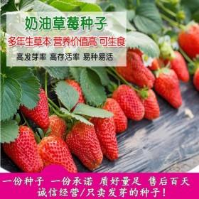 1000粒草莓种子