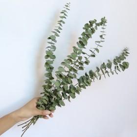 ins网红植物尤加利叶干花永生花束北欧风插花配叶