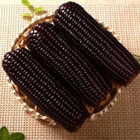 新鲜黑糯甜玉米3条真空包装