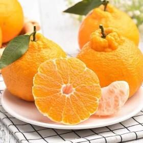 10斤四川不知火丑桔子橘子