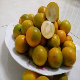 广西桂林脆皮金桔5斤新鲜水果阳朔大果小金橘滑皮金桔