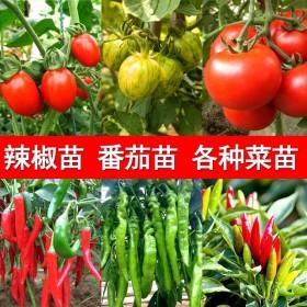 春季种植蔬菜苗盆栽【6棵包存活】