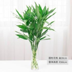 【5棵】富贵竹水培植物盆栽莲花竹绿植竹子花卉盆栽