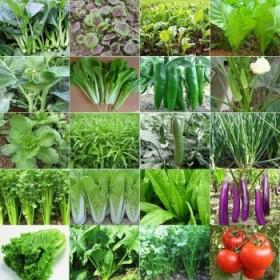 50包四季播种蔬菜种子阳台大棚
