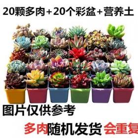20颗多肉植物多肉盆栽