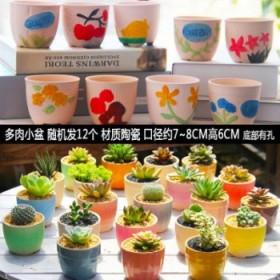 12个多肉花盆陶瓷特价清仓老桩室