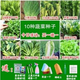 10种当季蔬菜种子四季播种菜种子套餐小葱香菜生菜阳