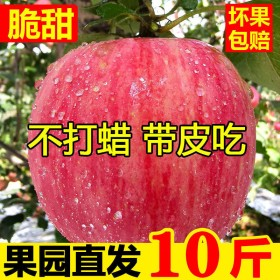 陕西红富士苹果水果10斤新鲜当季冰糖心现季丑苹果脆