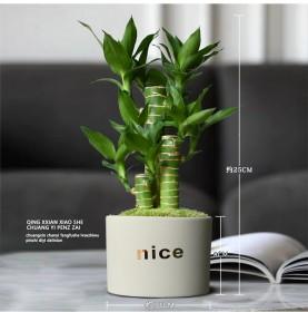 富贵竹室内净化空气绿植荷花竹办公室小盆栽转运植物耐