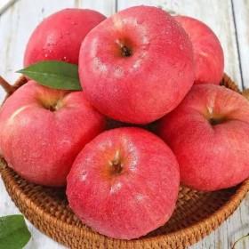 10斤山东烟台正宗红富士苹果