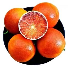 10斤塔罗科血橙红橙桔子橙子柑橘
