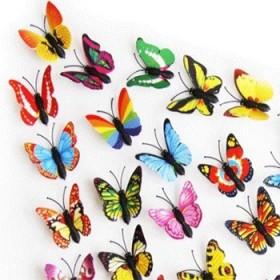 蝴蝶4只和小草1块