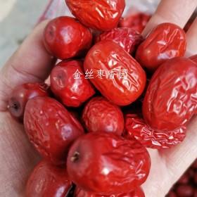 新疆小红枣零吃做粥做蛋糕泡茶等散装包邮新货市食
