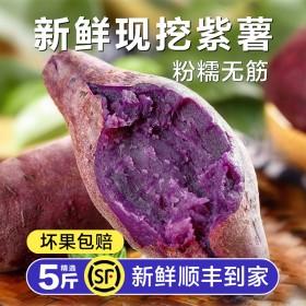 精选中果沙地紫薯粉糯无筋紫罗兰紫心红薯