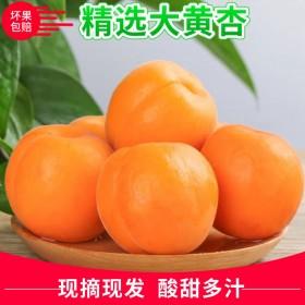 5斤现摘新鲜水果陕西大黄杏应季时令水果金太阳杏子梅