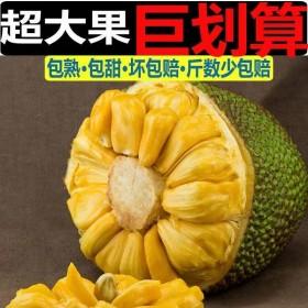 24-27斤海南新鲜黄肉干苞包 菠萝蜜一整个