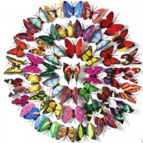 小草1块在送5只蝴蝶