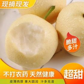 10斤皇冠梨正宗梨应季水果
