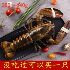 波士顿大龙虾野生鲜活速冻澳洲龙虾海鲜水产大只发顺丰