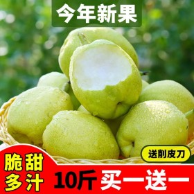 10斤陕西早酥梨现摘脆甜皮薄超甜水果皇冠雪梨子