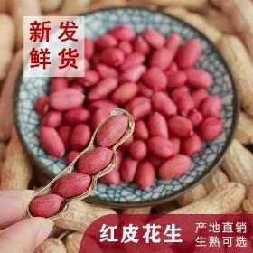 5斤精选红皮花生带壳花生米新鲜四粒红花生果种子