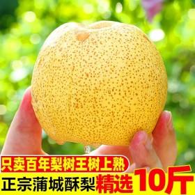10斤砀山梨陕西蒲城酥梨脆甜多汁新鲜水果