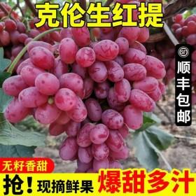现摘克伦生红提净重4斤葡萄新鲜应季孕妇水果爆甜无籽