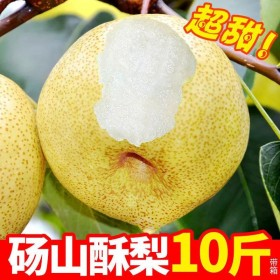 10斤大果正宗砀山酥梨百年梨树整箱包邮新鲜梨子现摘