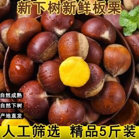 5斤板栗甜栗子软糯香甜毛栗子