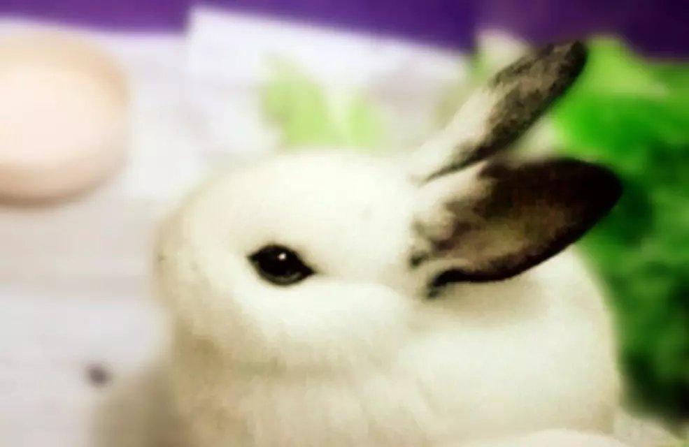 商家:妍范小兔